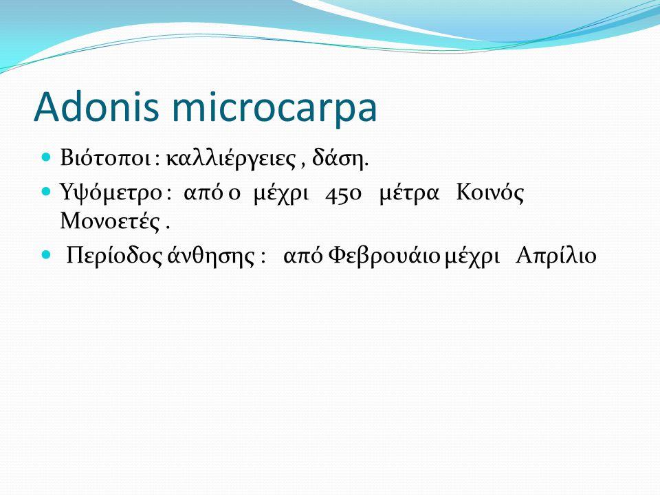 Adonis microcarpa Βιότοποι : καλλιέργειες , δάση.
