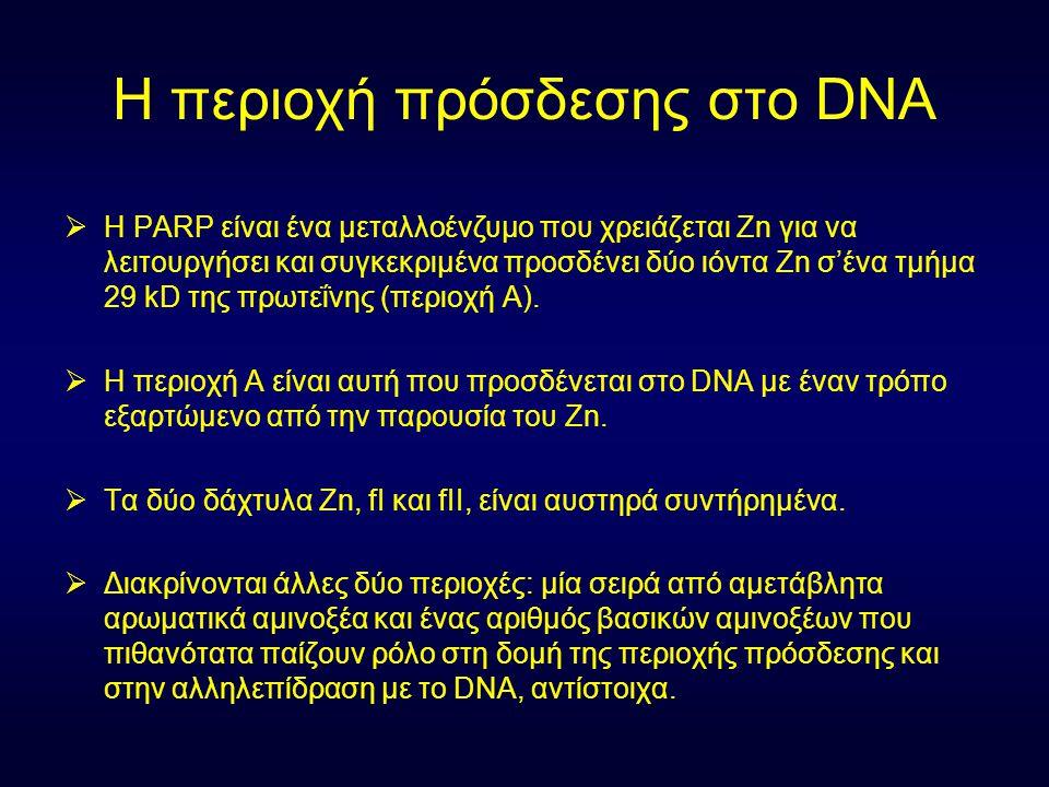 Η περιοχή πρόσδεσης στο DNA