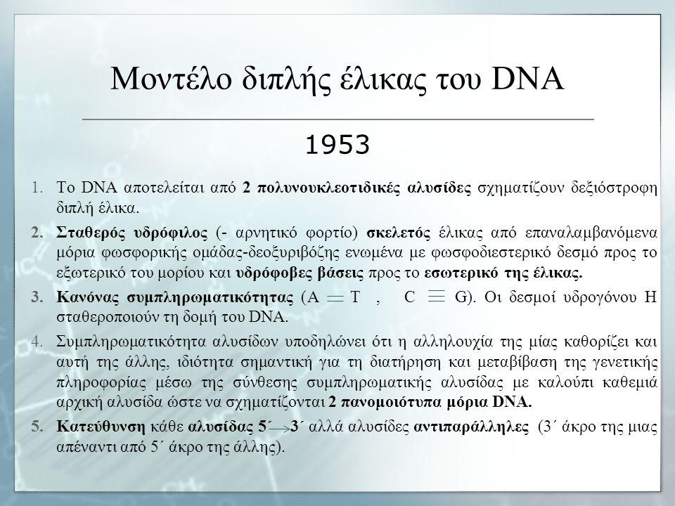 Μοντέλο διπλής έλικας του DNA 1953