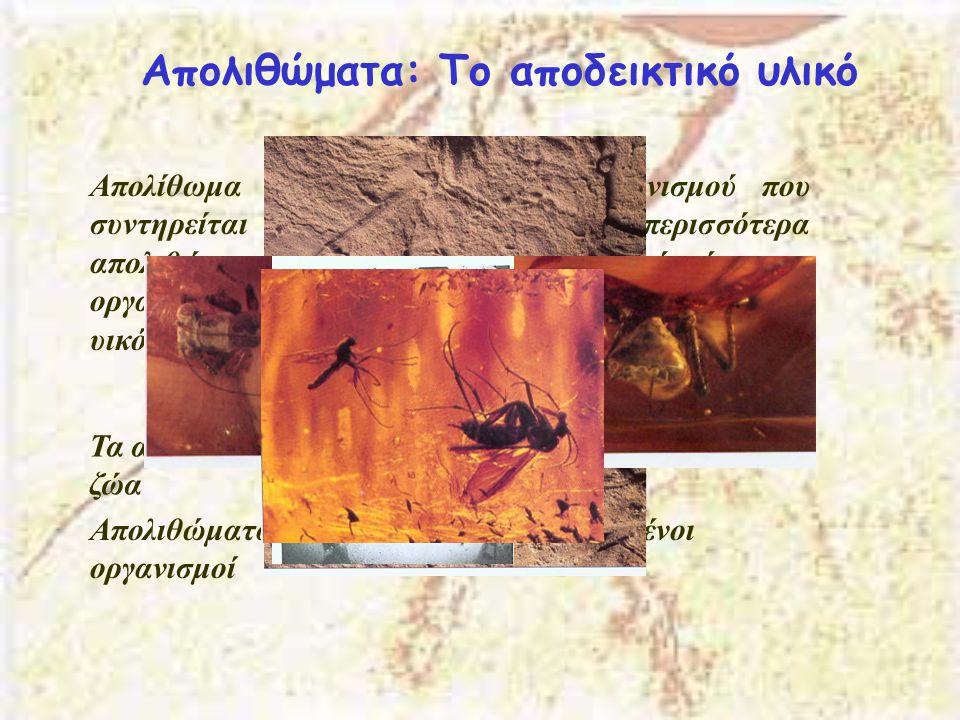 Απολιθώματα: Το αποδεικτικό υλικό