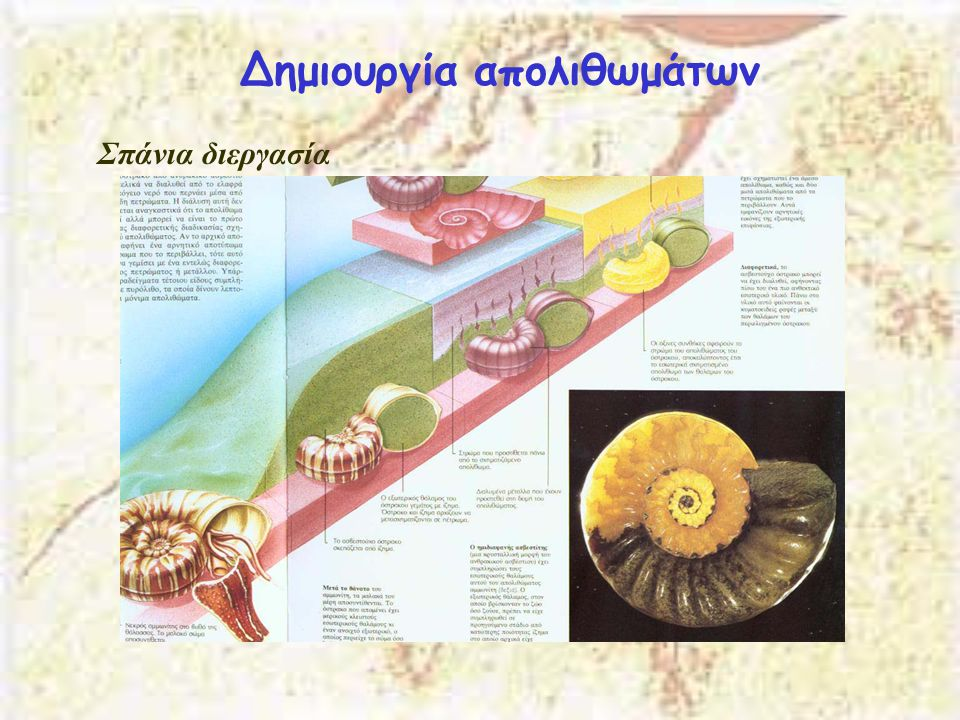 Δημιουργία απολιθωμάτων