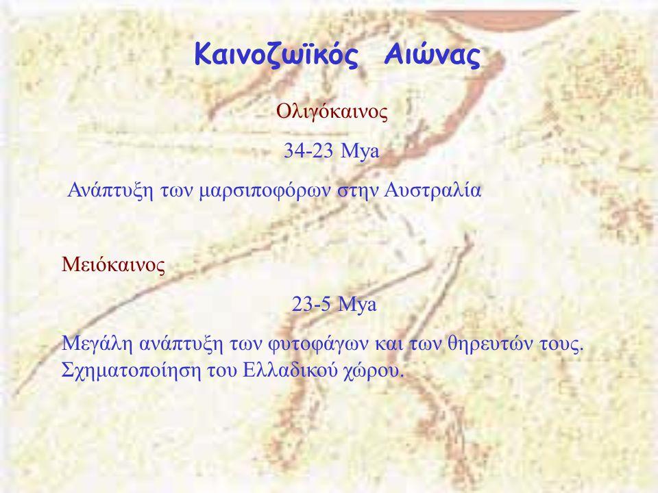 Καινοζωϊκός Αιώνας Ολιγόκαινος 34-23 Μya
