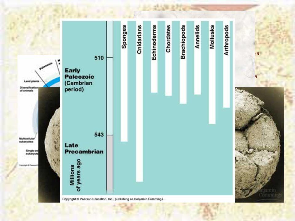 Η «παράσταση» της ζωής Οι ευκαρυωτικοί οργανισμοί εμφανίζονται πριν 2,1 Βya. Οι πολυκύτταροι οργανισμοί εμφανίζονται πριν 1,2 Βya.