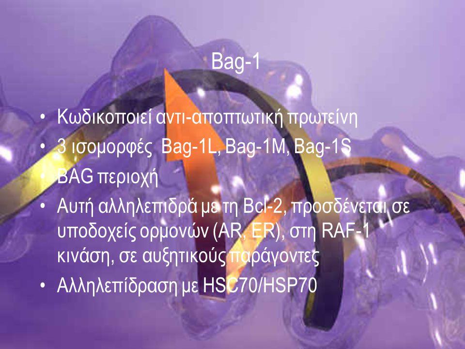 Bag-1 Κωδικοποιεί αντι-αποπτωτική πρωτείνη