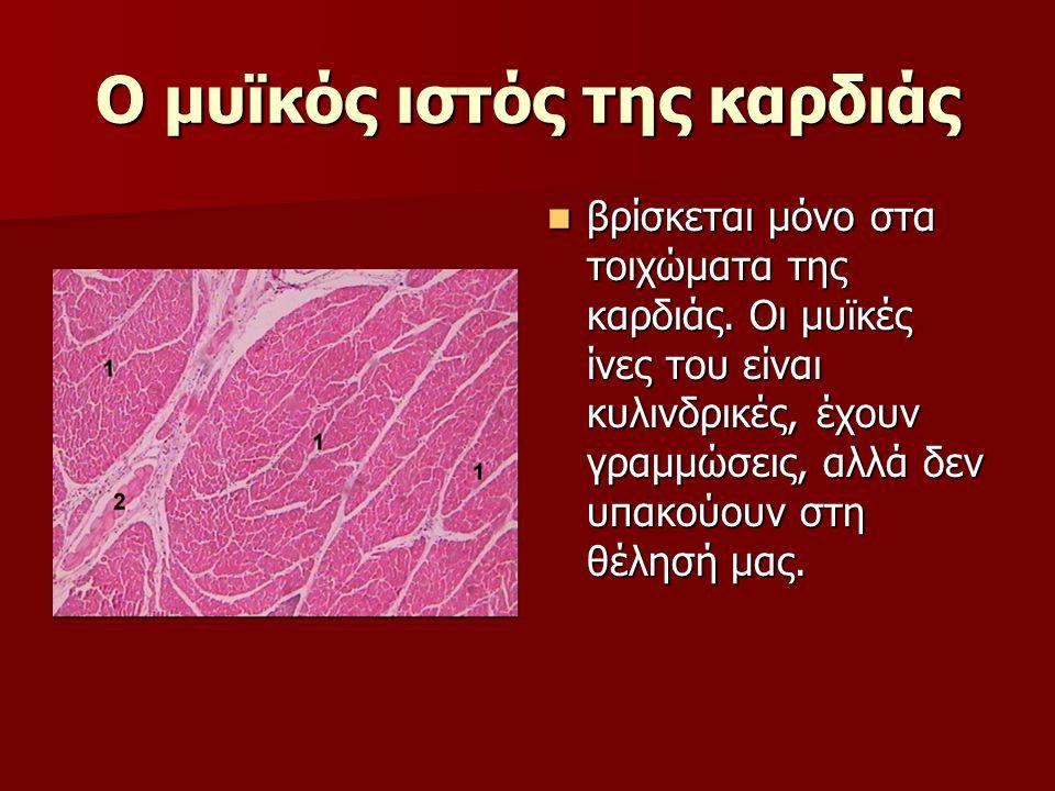 Ο μυϊκός ιστός της καρδιάς