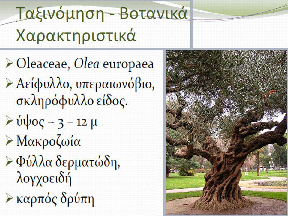 Εβδομάδα Δέντρου Ελία Δέντρο χρονιάς 2012 20