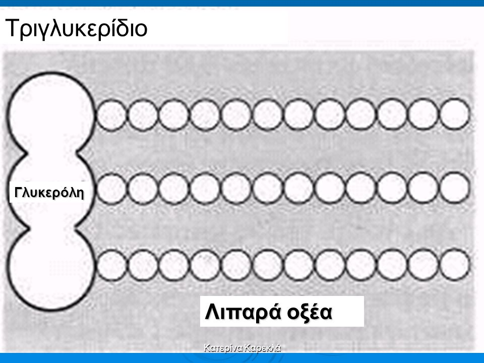 Τριγλυκερίδιο Γλυκερόλη Λιπαρά οξέα Κατερίνα Καρεκλά