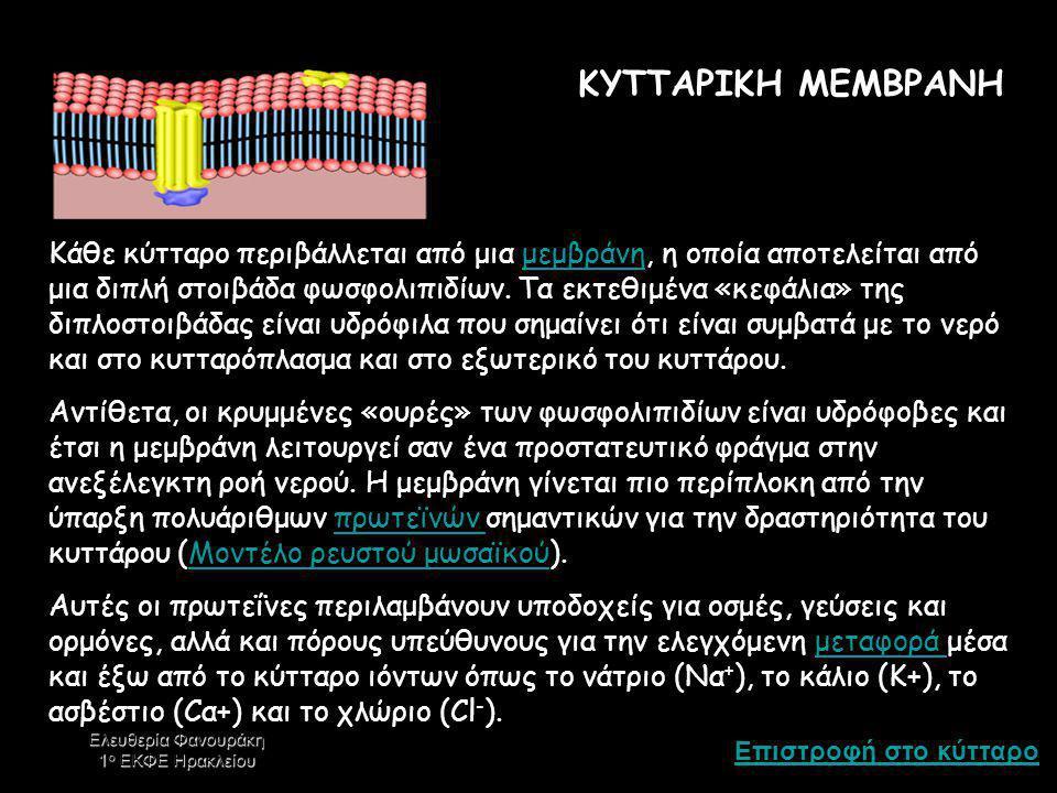 ΚΥΤΤΑΡΙΚΗ ΜΕΜΒΡΑΝΗ