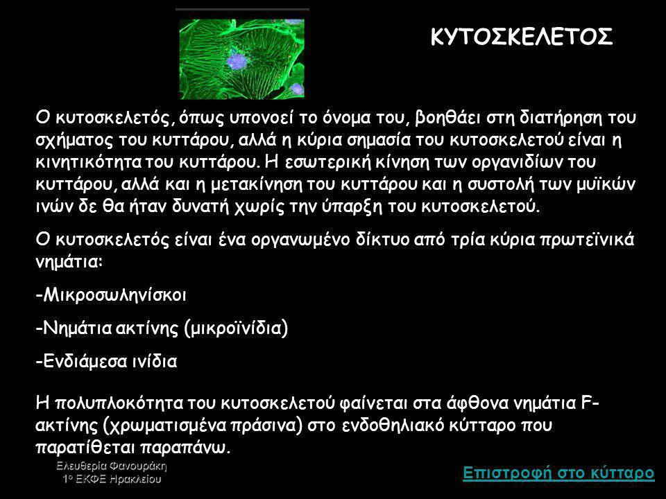 ΚΥΤΟΣΚΕΛΕΤΟΣ