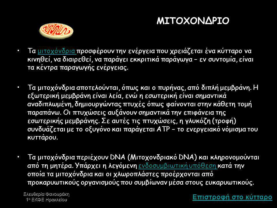 ΜΙΤΟΧΟΝΔΡΙΟ