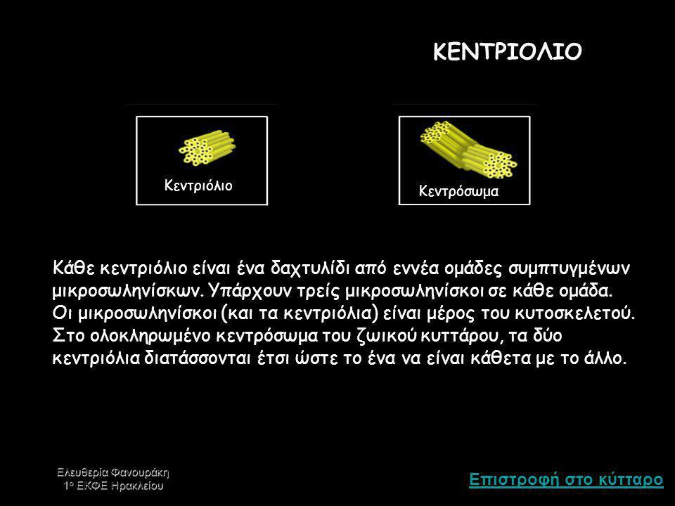 ΚΕΝΤΡΙΟΛΙΟ Κεντριόλιο. Κεντρόσωμα.