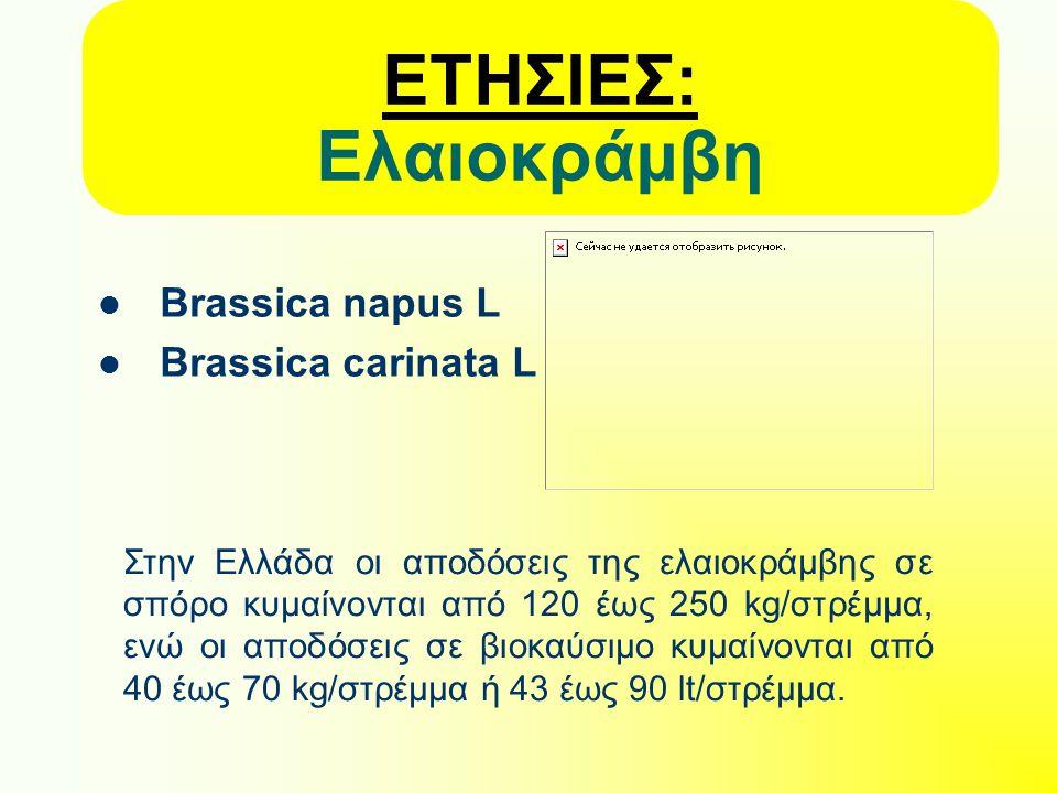 ΕΤΗΣΙΕΣ: Ελαιοκράμβη Brassica napus L Brassica carinata L