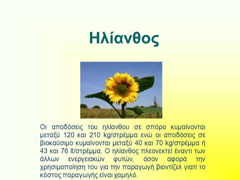Ηλίανθος