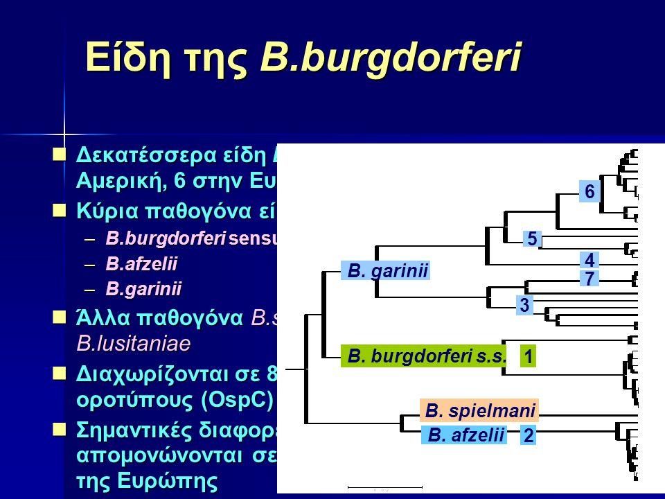 Είδη της B.burgdorferi Δεκατέσσερα είδη B.burgdorferi sensu lato (5 στην Αμερική, 6 στην Ευρώπη και 7 στην Ασία)
