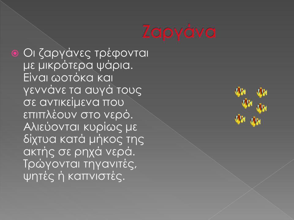 Ζαργάνα