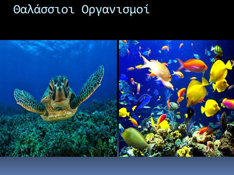 Θαλάσσιοι Οργανισμοί