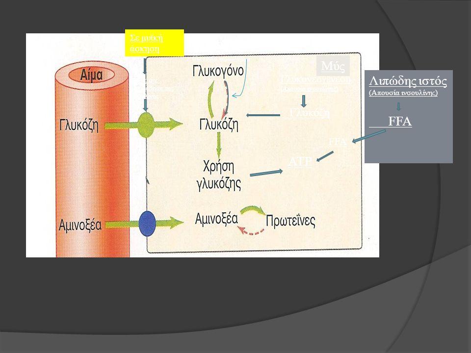 Μύς Λιπώδης ιστός FFA ATP Γλυκόζη Γλυκονεογένεση FFA Σε μυϊκή άσκηση