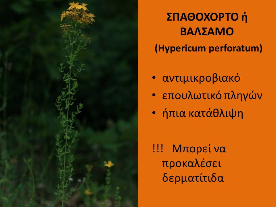 ΣΠΑΘΟΧΟΡΤΟ ή ΒΑΛΣΑΜΟ (Hypericum perforatum)