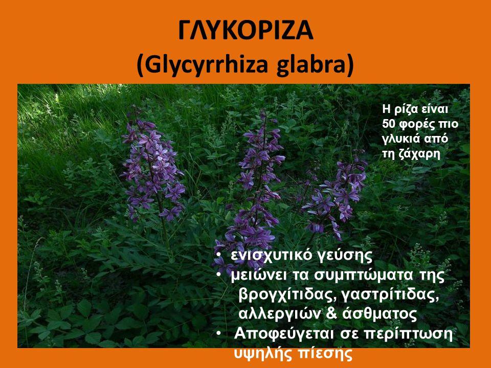 ΓΛΥΚΟΡΙΖΑ (Glycyrrhiza glabra)