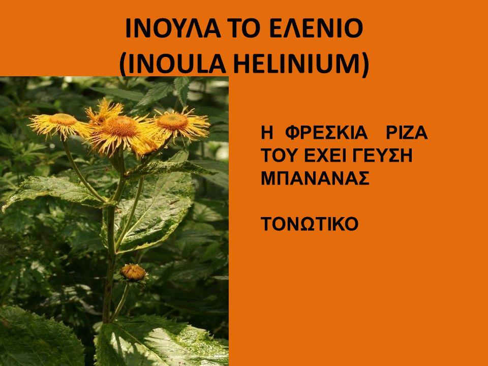 ΙΝΟΥΛΑ TO EΛENIO (INOULA HELINIUM)