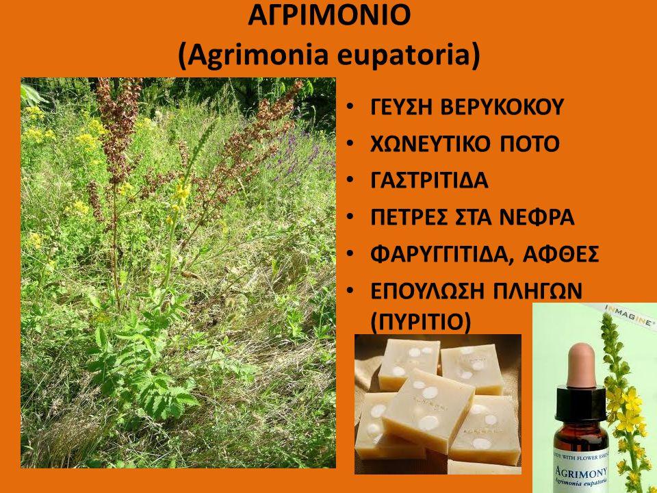 ΑΓΡΙΜΟΝΙΟ (Agrimonia eupatoria)
