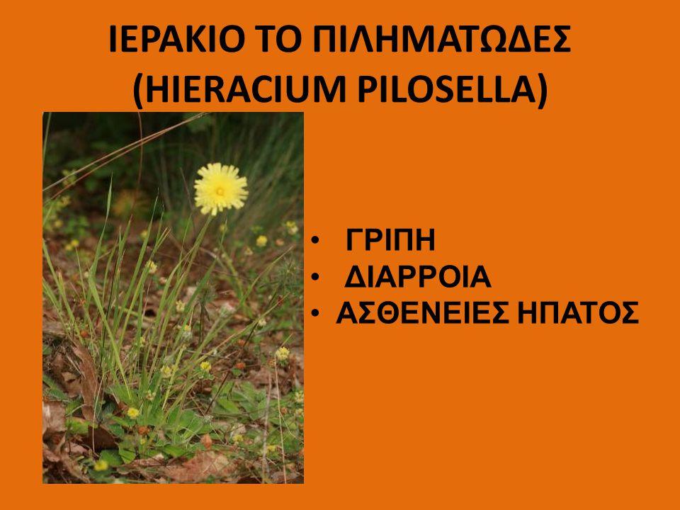 ΙΕΡΑΚΙΟ ΤΟ ΠΙΛΗΜΑΤΩΔΕΣ (HIERACIUM PILOSELLA)
