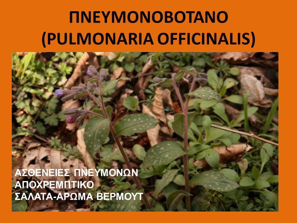 ΠΝΕΥΜΟΝΟΒΟΤΑΝΟ (PULMONARIA OFFICINALIS)