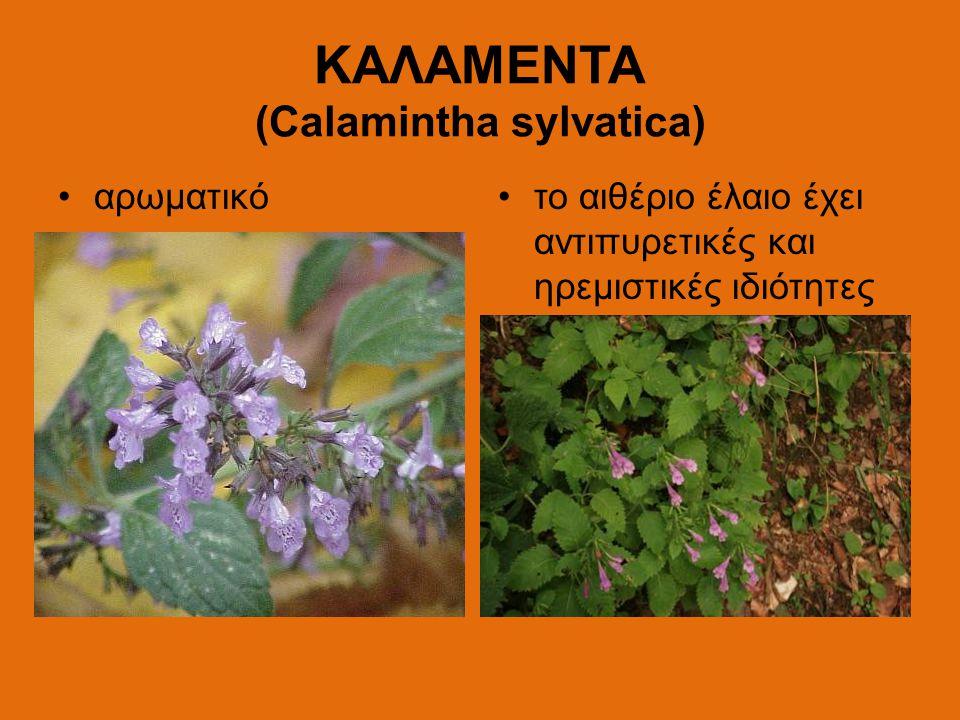 ΚΑΛΑΜΕΝΤΑ (Calamintha sylvatica)