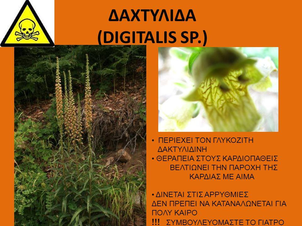 ΔΑΧΤΥΛΙΔΑ (DIGITALIS SP.)