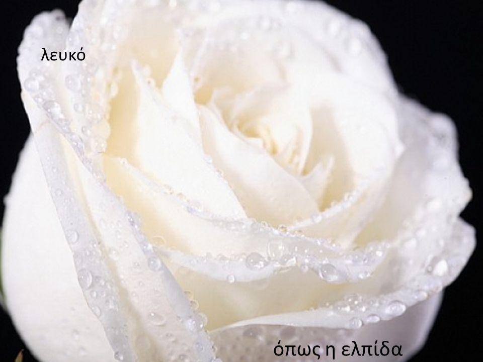 λευκόλευκό λευκό όπως η ελπίδα