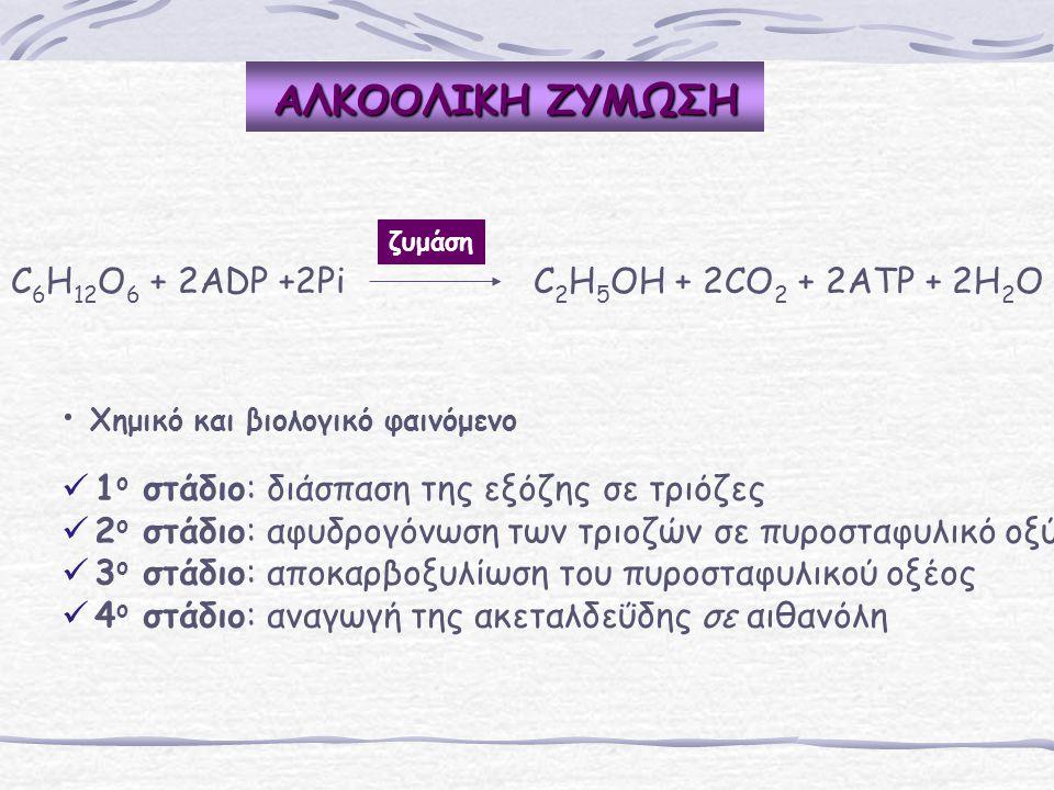 ΑΛΚΟΟΛΙΚΗ ΖΥΜΩΣΗ C6H12O6 + 2ADP +2Pi C2H5OH + 2CO2 + 2ATP + 2H2O