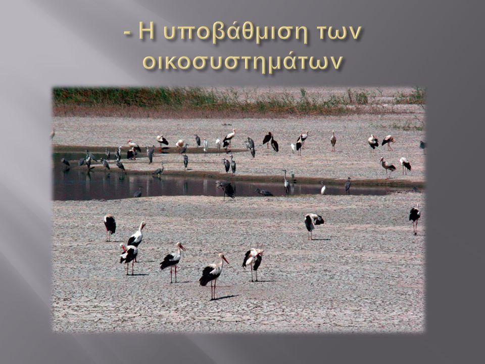 - Η υποβάθμιση των οικοσυστημάτων