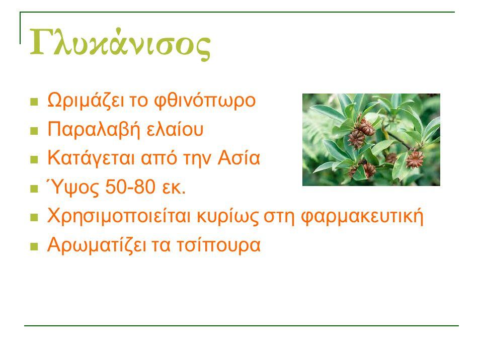 Γλυκάνισος Ωριμάζει το φθινόπωρο Παραλαβή ελαίου