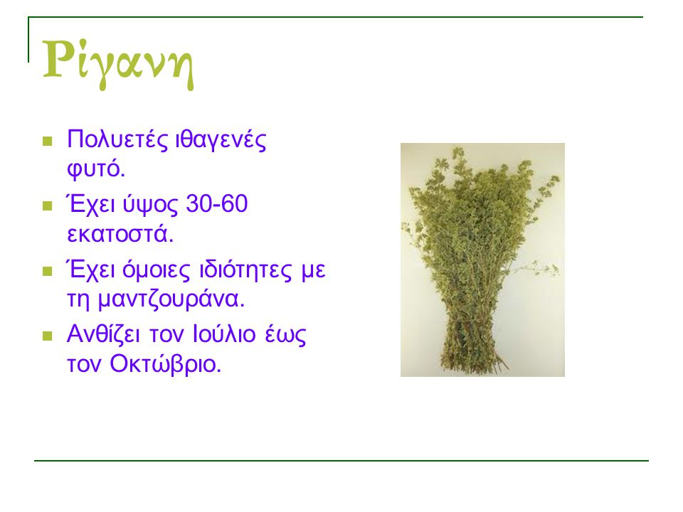 Ρίγανη Πολυετές ιθαγενές φυτό. Έχει ύψος 30-60 εκατοστά.