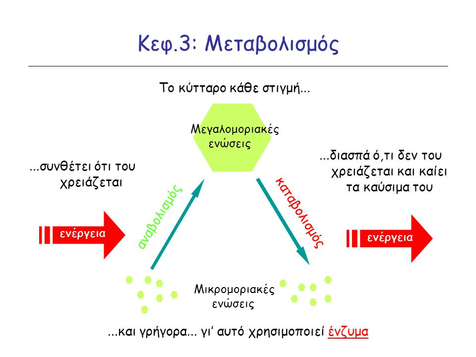 Κεφ.3: Μεταβολισμός Το κύτταρο κάθε στιγμή...