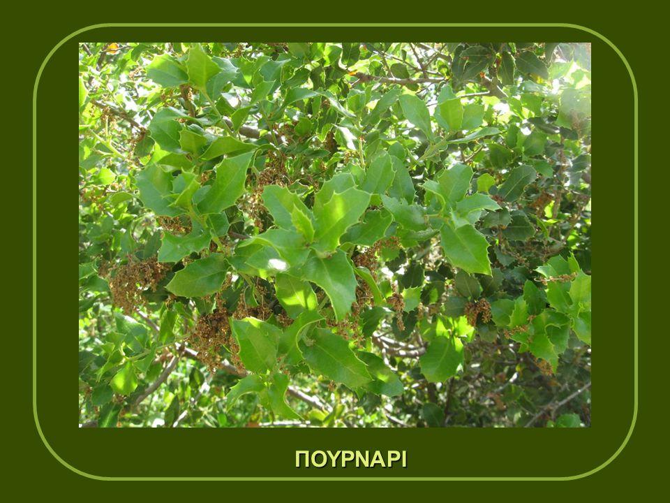 Στη Μεγαλόπολη υπάρχουν μεγάλες περιοχές με πεύκα,αλλά και μεγάλες εκτάσεις με θάμνους όπως πουρνάρια, κουμαριές, δάφνες
