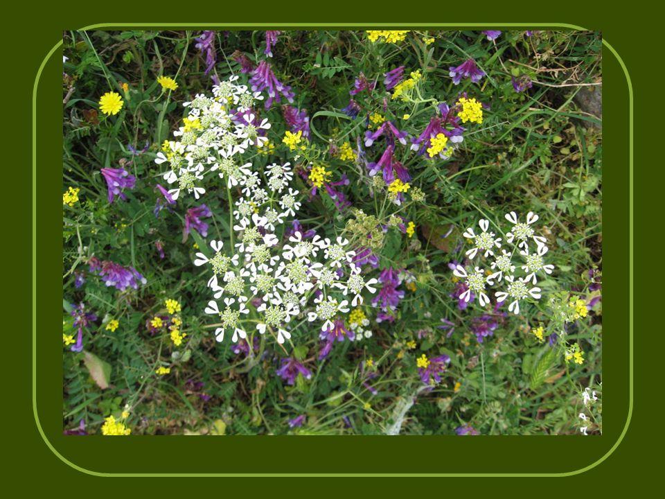 Και χορτολείβαδα με μεγάλη ποικιλία λουλουδιών