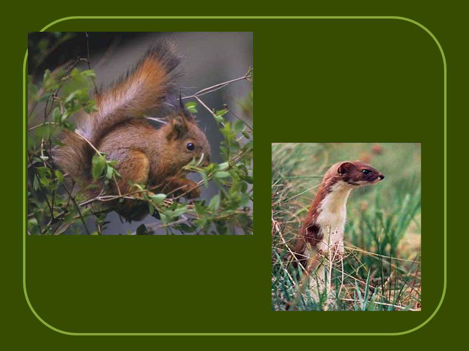 τον σκίουρο, την νυφίτσα και και το κουνάβι, έντομα και ερπετά