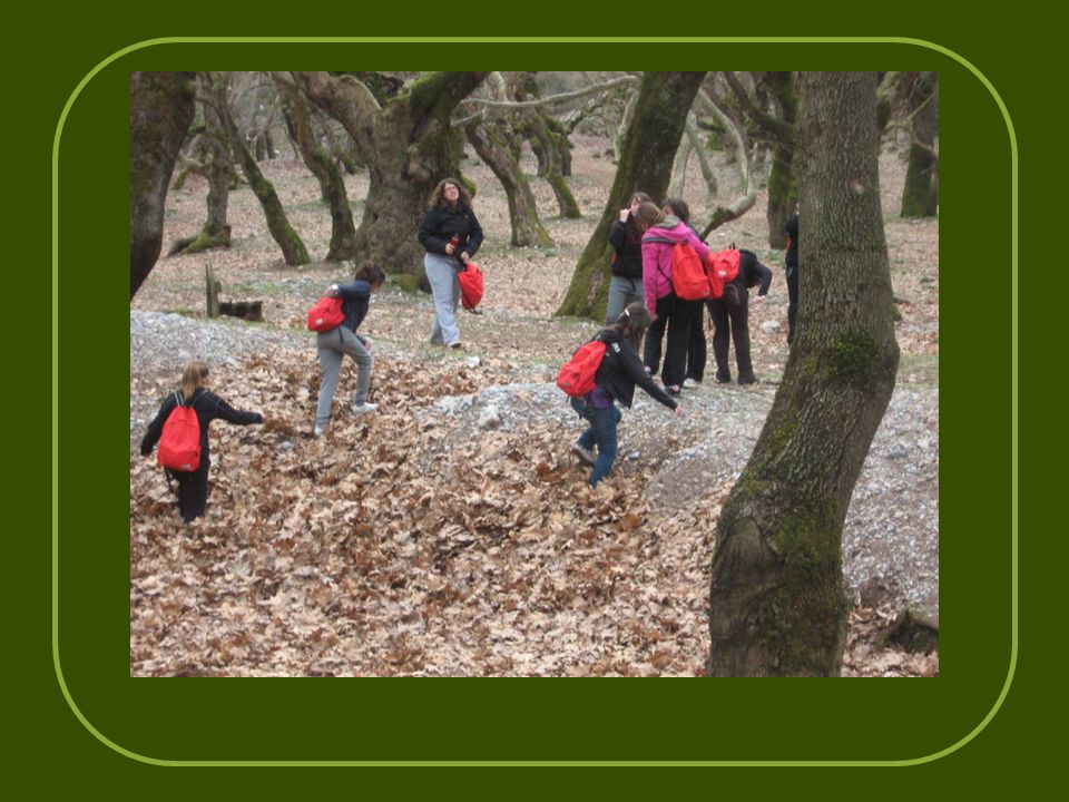Γνωρίζοντας τα δάση από κοντά, καταλάβαμε ότι μας προσφέρουν