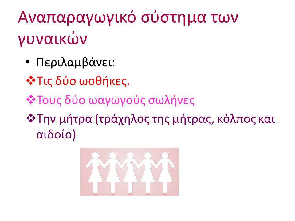 Αναπαραγωγικό σύστημα των γυναικών