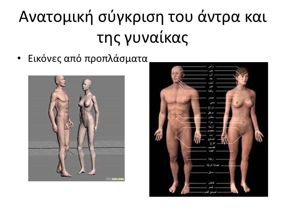 Ανατομική σύγκριση του άντρα και της γυναίκας