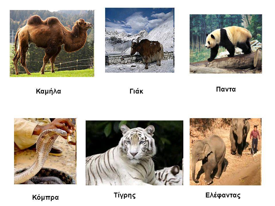 Παντα Καμήλα Γιάκ Τίγρης Ελέφαντας Κόμπρα