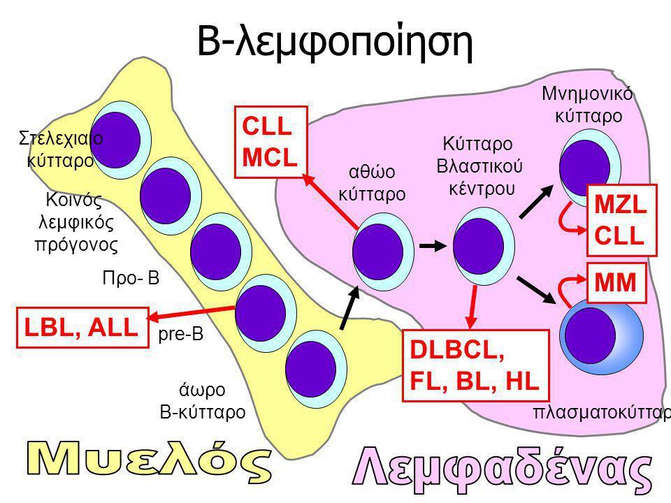 Β-λεμφοποίηση Μυελός Λεμφαδένας CLL MCL MZL MM LBL, ALL DLBCL,