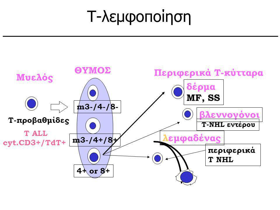 Τ-λεμφοποίηση Υποθετικά φυσιολογικά κύτταρα: ΘΥΜΟΣ