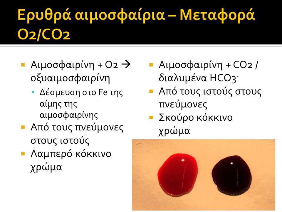 Ερυθρά αιμοσφαίρια – Μεταφορά O2/CO2
