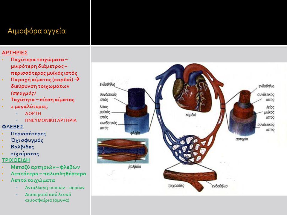 Αιμοφόρα αγγεία ΑΡΤΗΡΙΕΣ
