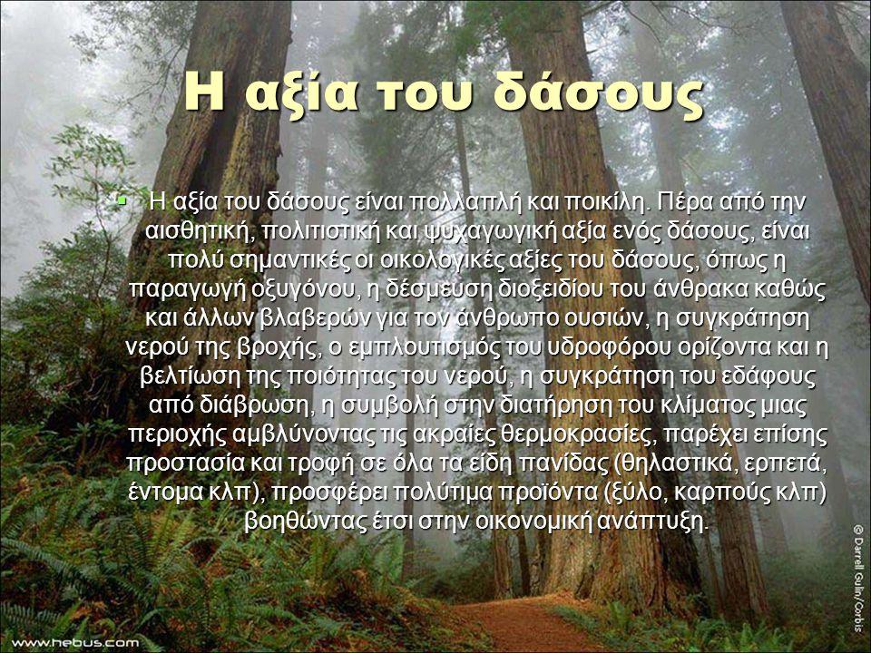 Η αξία του δάσους