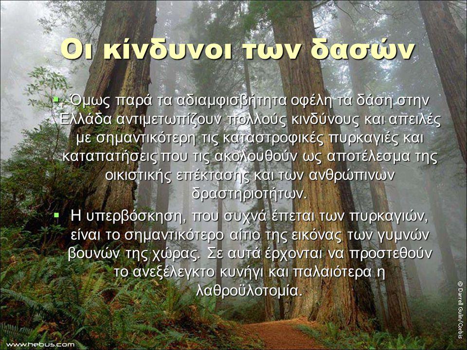 Οι κίνδυνοι των δασών