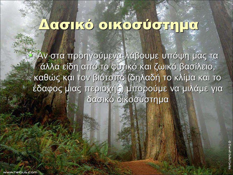 Δασικό οικοσύστημα