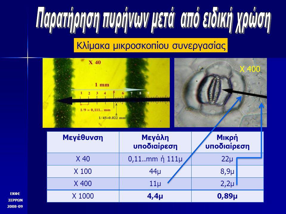 Παρατήρηση πυρήνων μετά από ειδική χρώση
